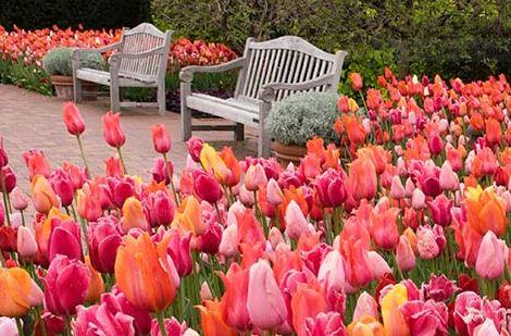 Jardin botanico de chicago chicago tiempo libre for Audio libro el jardin secreto